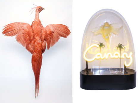 phoenix_canary