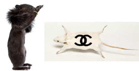 Squirrel and Gucci mouse