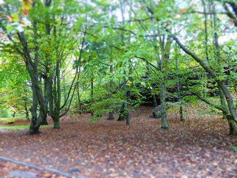 Gothenburg forest
