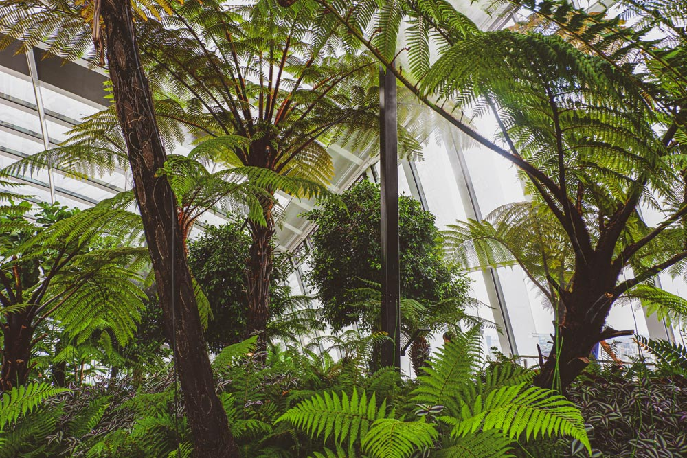 ferns and trees in the Sky Garden