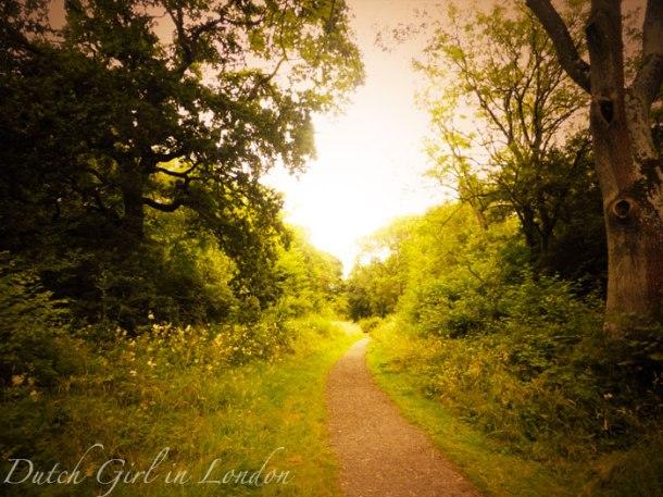 corby-rockingham-forest-hazel-thoroughsale-forest