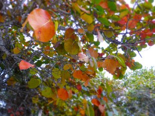 Winter leaves in Florida