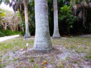 Tree trunks or elephant legs?