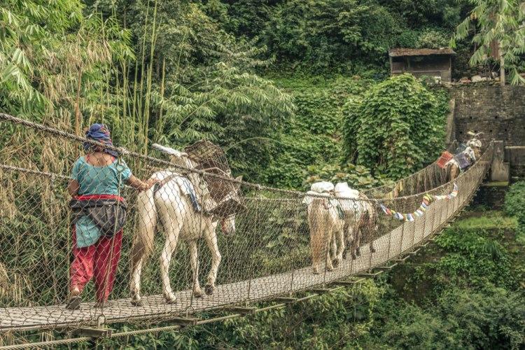 donkey-bridge-saying-dutch-girl-in-london