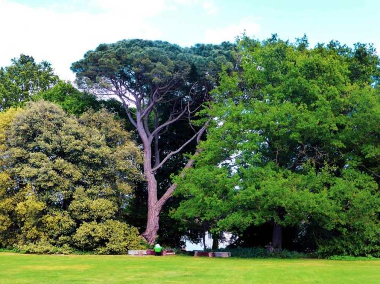 Tall trees in Strawberry Hill House Garden