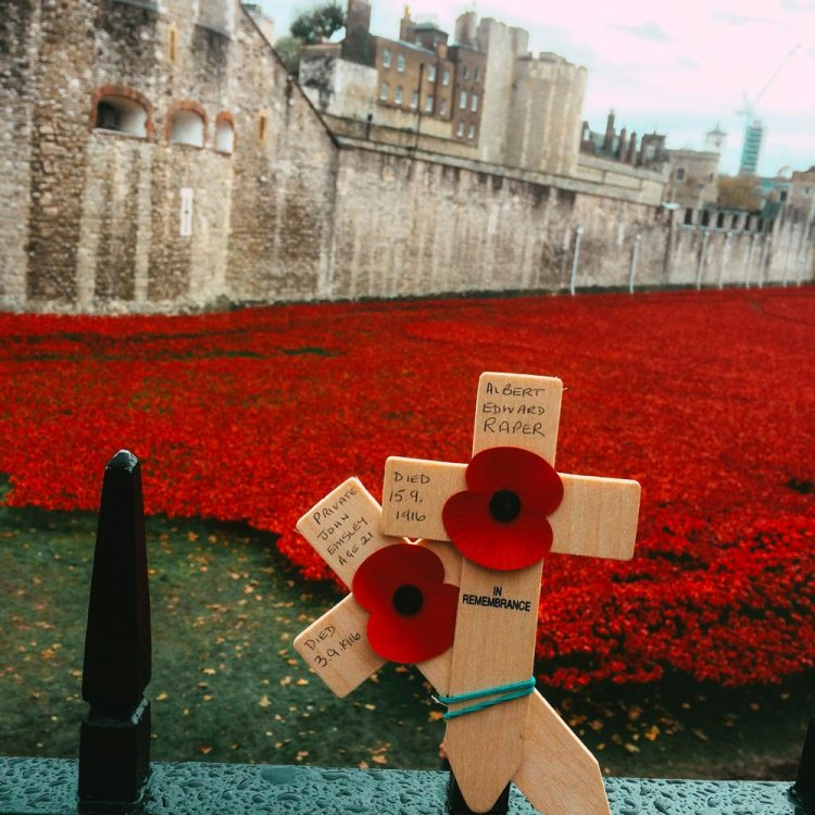Poppy installation at Tower of London in 2014